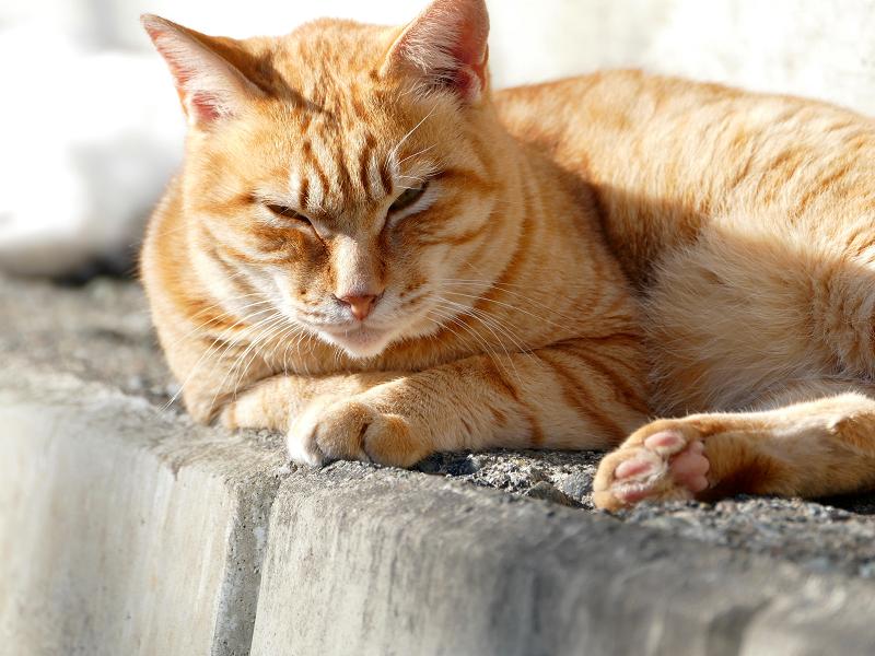 睨み顔の茶トラ猫