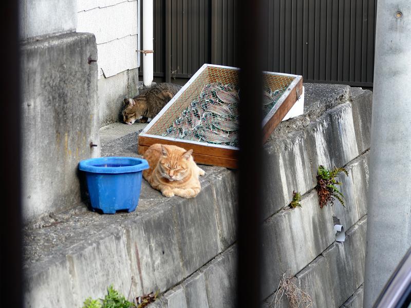 干物と猫たち1