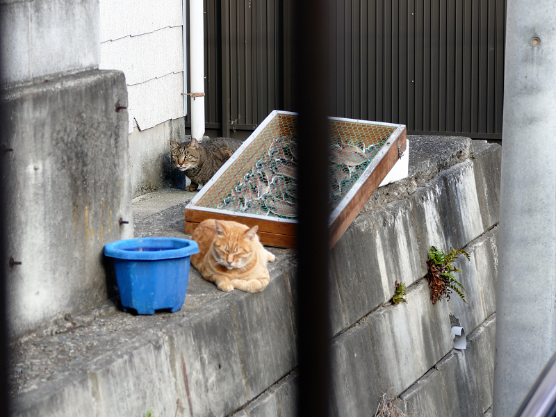 干物と猫たち2