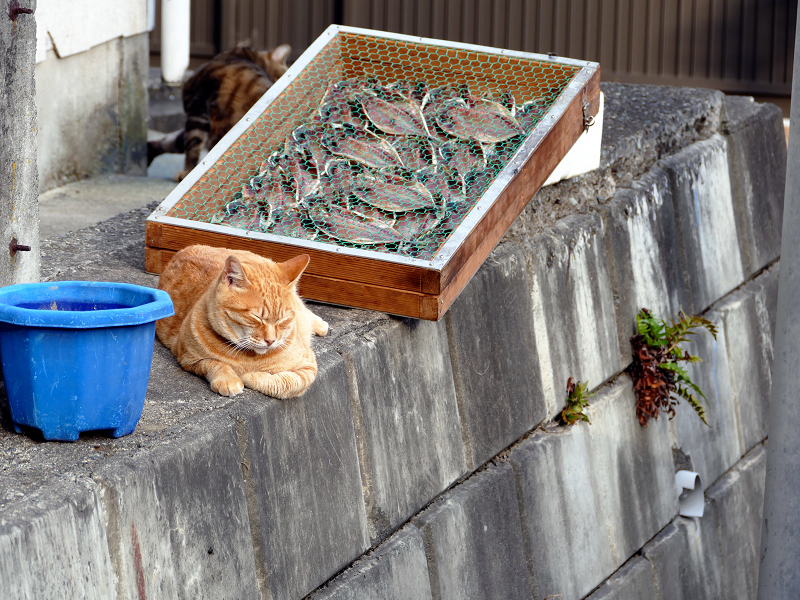 干物と猫たち3