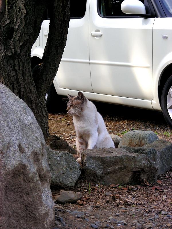 ボスの風格を持つ猫1