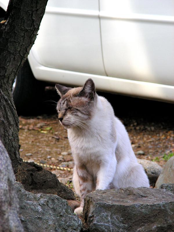 ボスの風格を持つ猫2