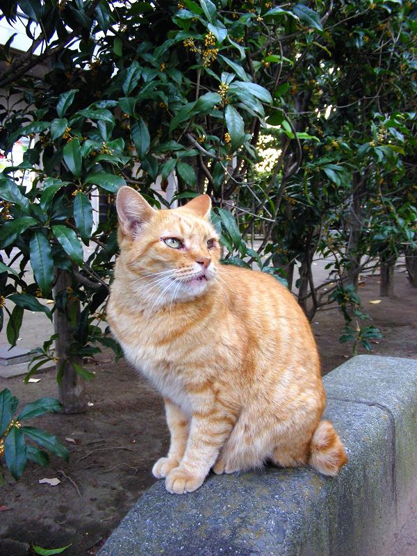 縁石に乗ってる茶白猫1