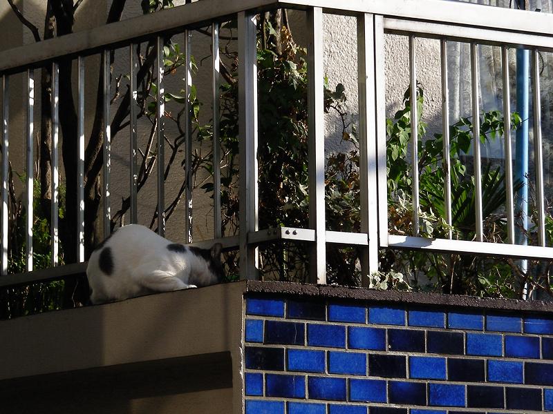 青いタイルとブチ柄猫2