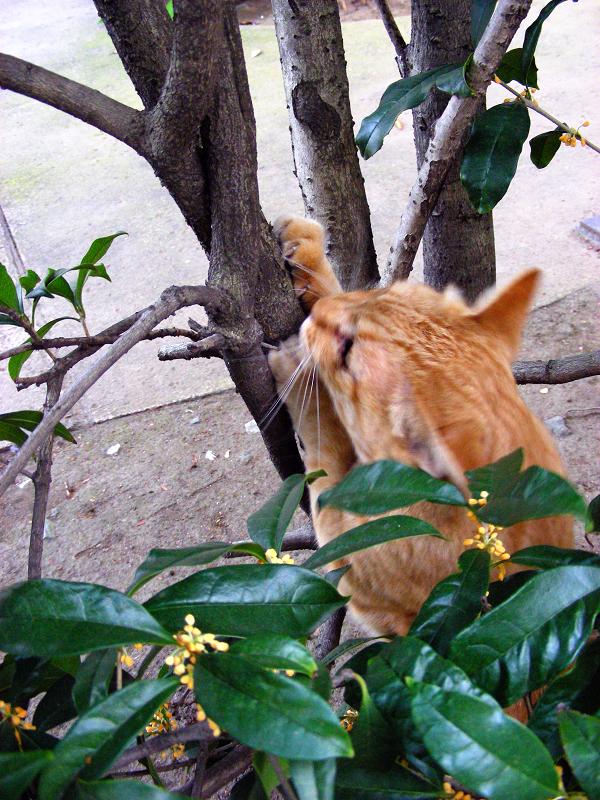 縁石に乗ってる茶白猫3