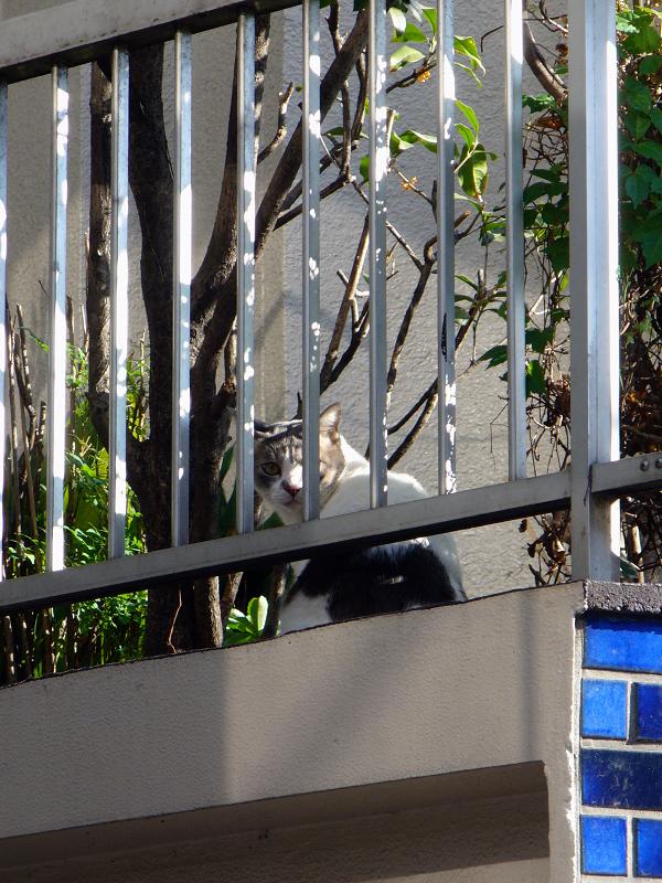 青いタイルとブチ柄猫3