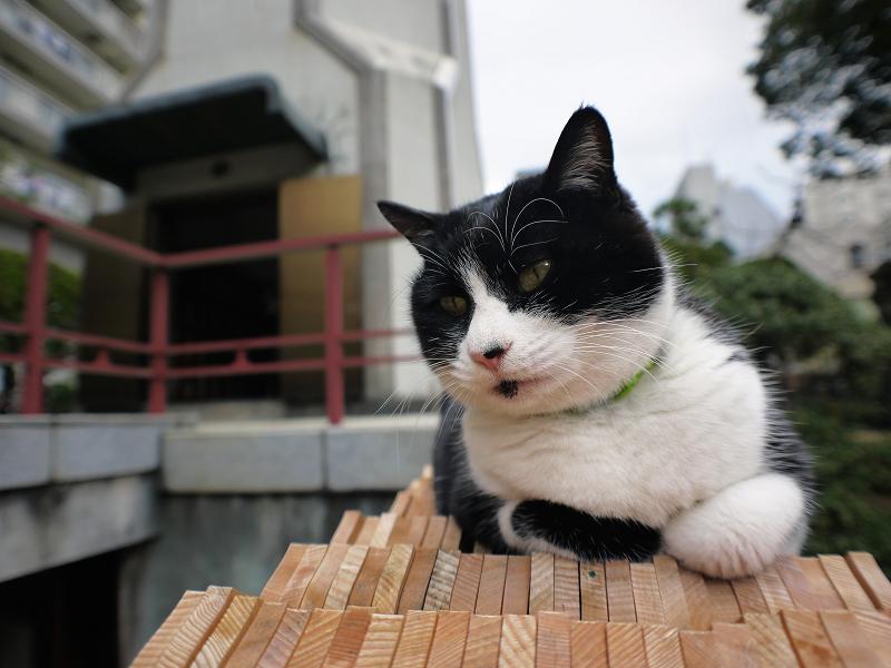 卒塔婆の上の黒白猫