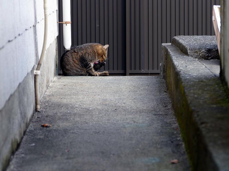 スロープ奥のキジトラ猫1