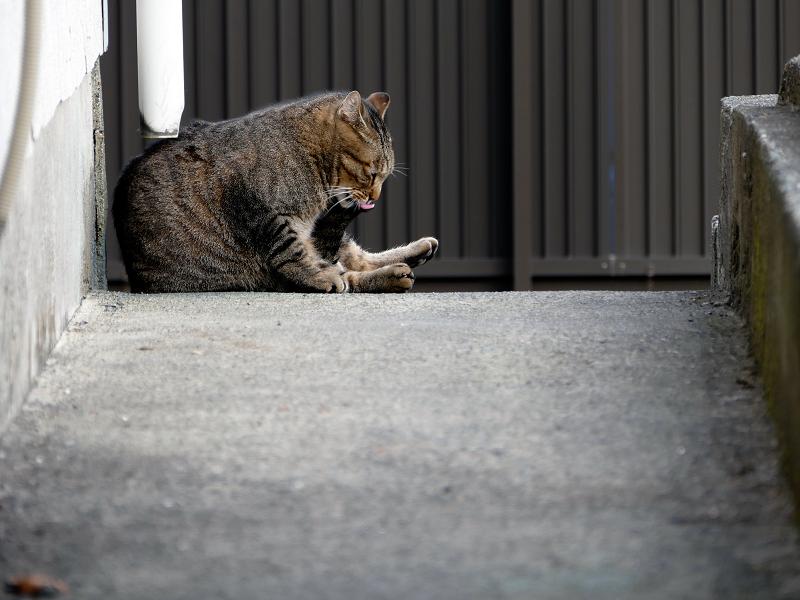 スロープ奥のキジトラ猫3