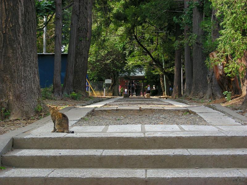 参道のサビ柄猫1