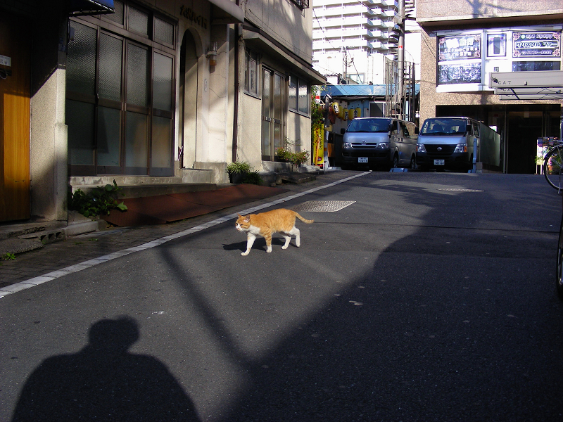 飲み屋街を歩く茶白猫1