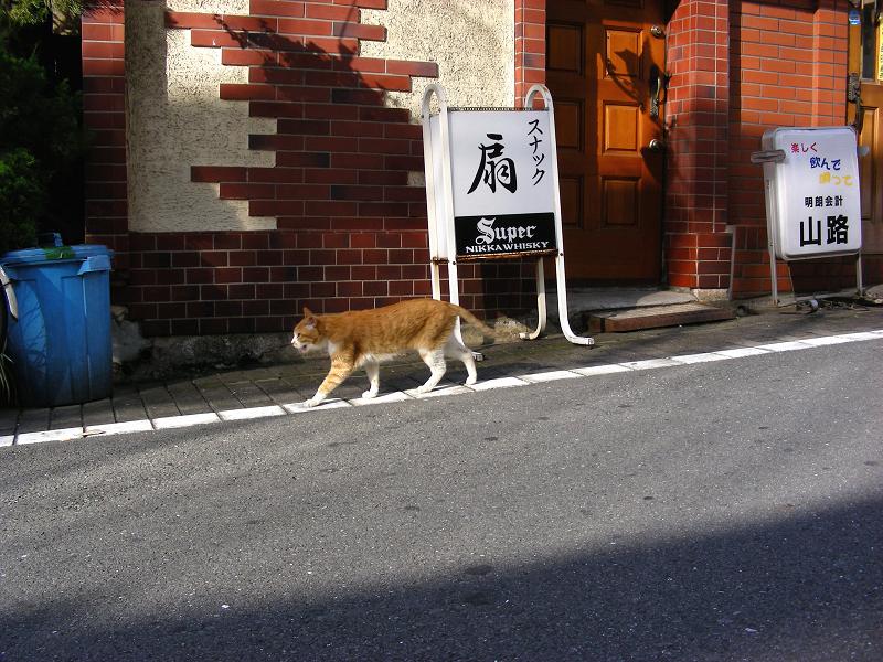飲み屋街を歩く茶白猫2