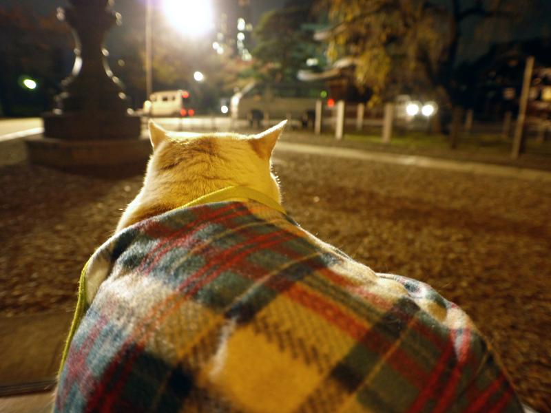 夕暮れ境内で膝に乗った茶白猫2