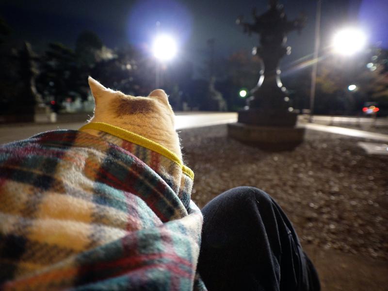 夕暮れ境内で膝に乗った茶白猫3