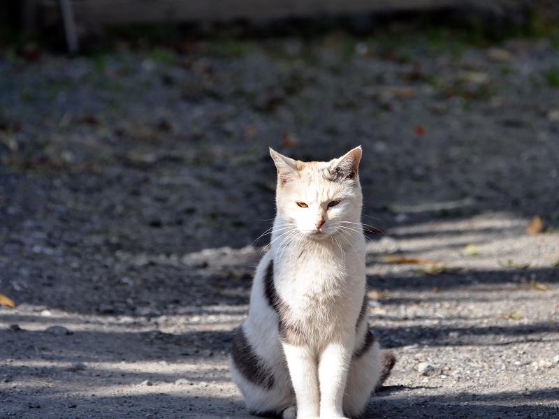 光と影と薄三毛猫1