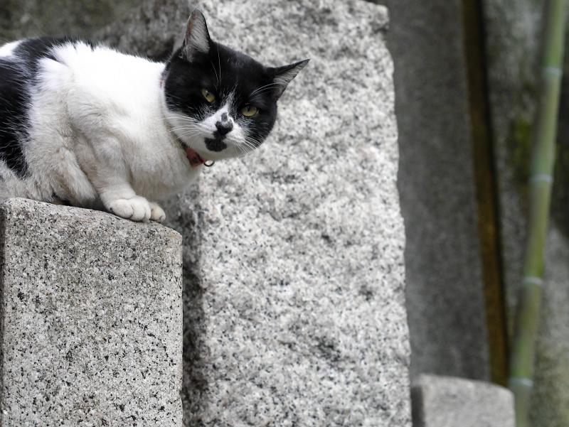 石柱と白黒猫1