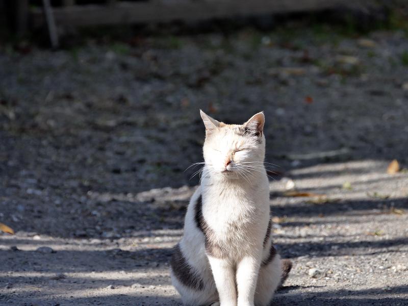 光と影と薄三毛猫2