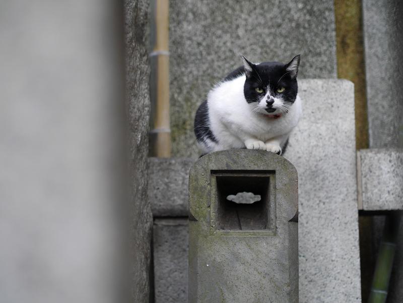 石柱と白黒猫2