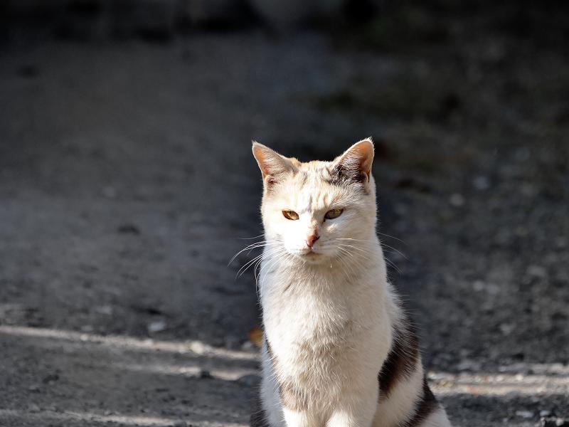 光と影と薄三毛猫3