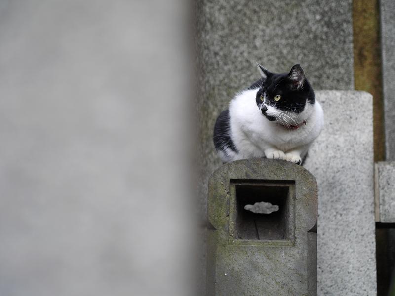 石柱と白黒猫3