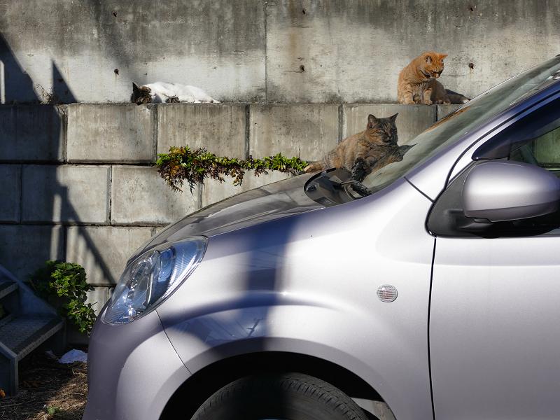 動き出した駐車場の猫1