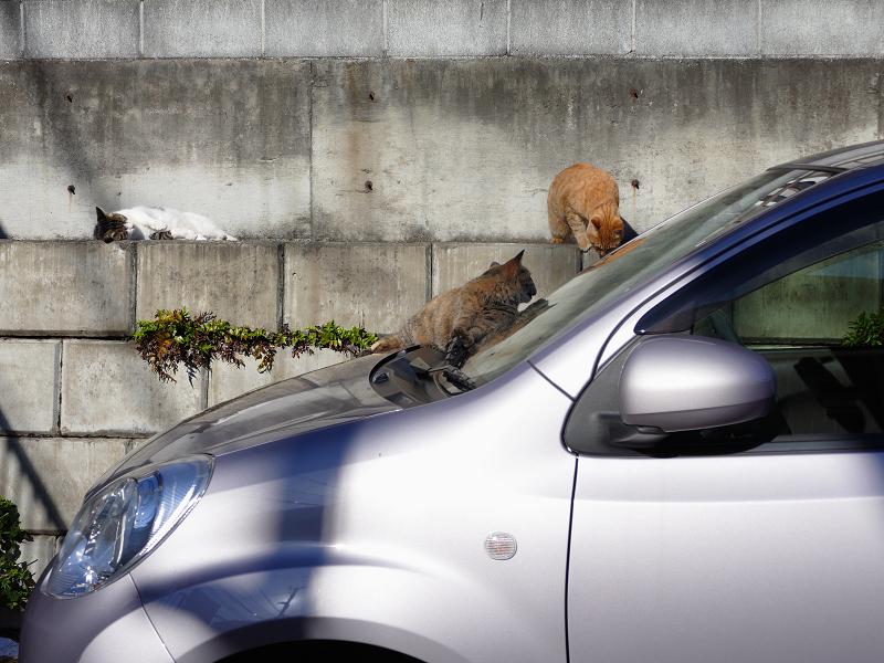 動き出した駐車場の猫2