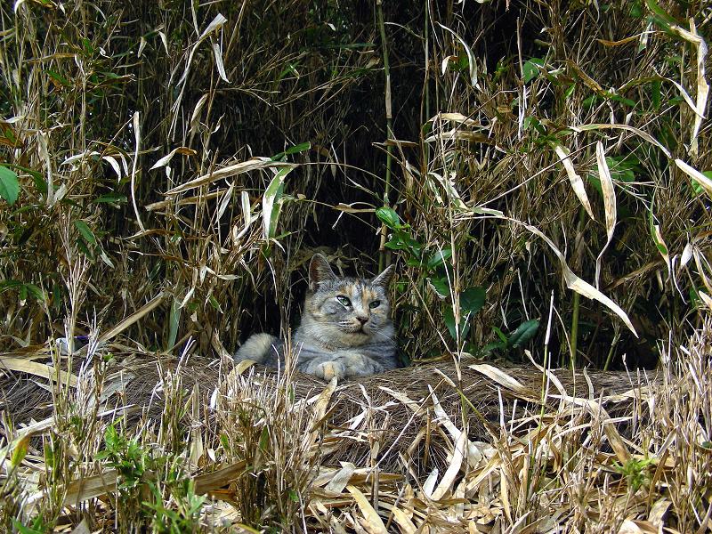 薮のサビ三毛猫1