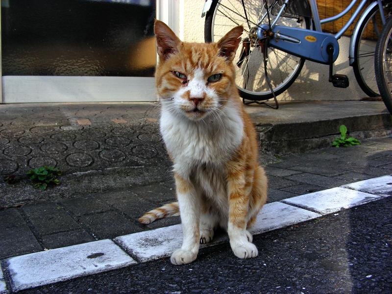 白線上で見つめ合った茶白猫1