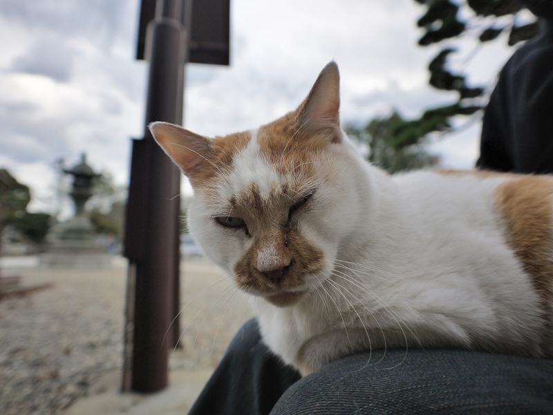 本堂横で膝に乗った茶白猫2