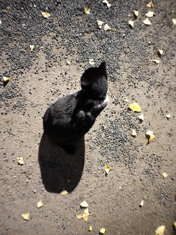 暖かい日差しと黒白猫1