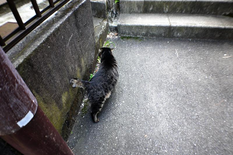 階段手前のキジトラ猫1