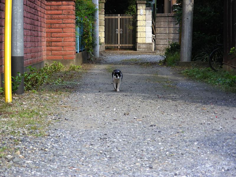 路地と黒白猫1