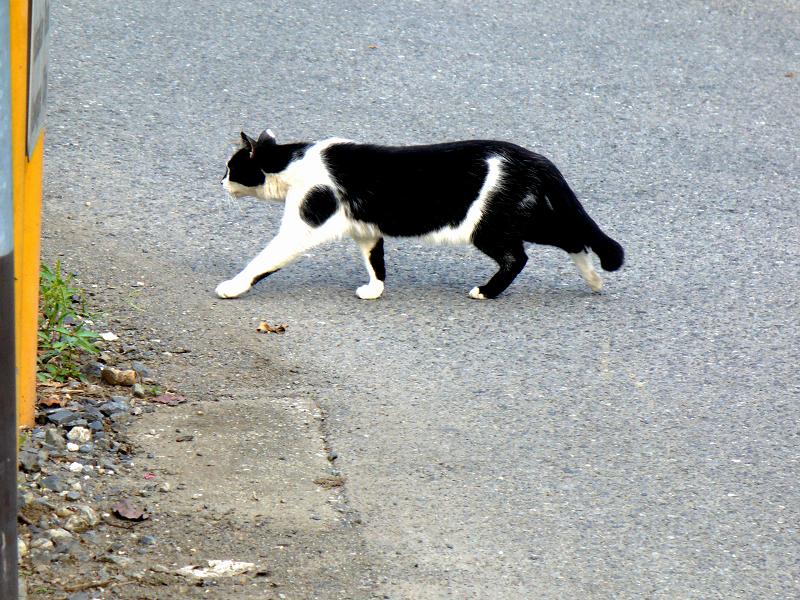 路地と黒白猫2