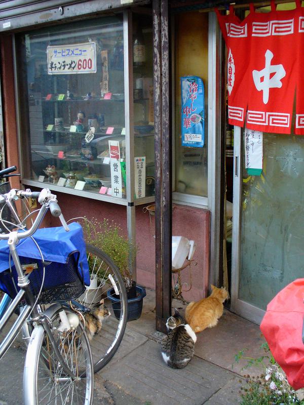 中華屋と猫2