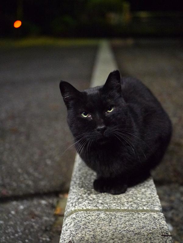 縁石に乗ってる黒猫
