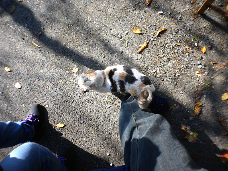 光と影と足元の薄三毛猫1