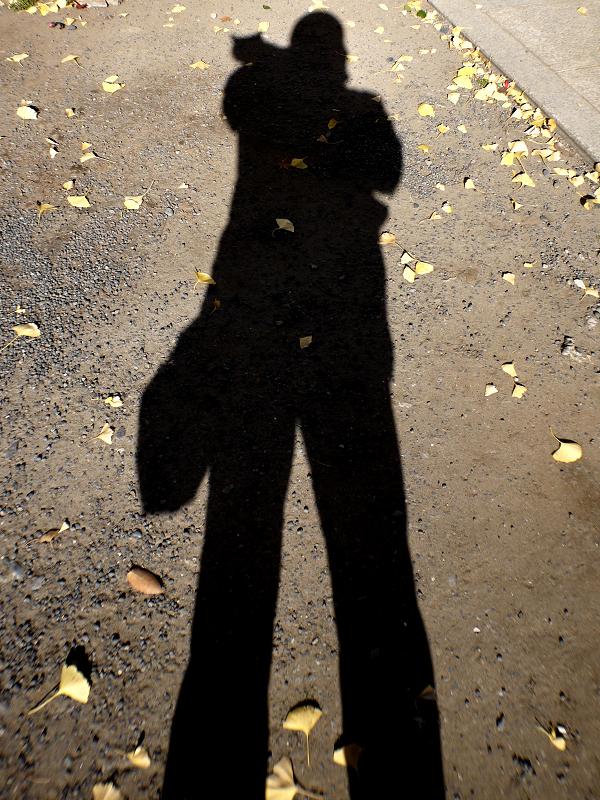 冬の日差しと猫を乗せた影