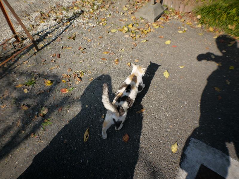 光と影と足元の薄三毛猫3