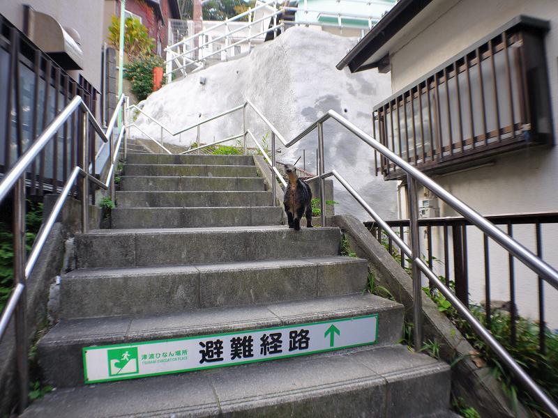 階段を駆け上がるキジトラ猫2