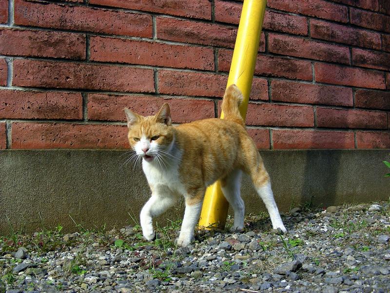 赤レンガと茶白猫2