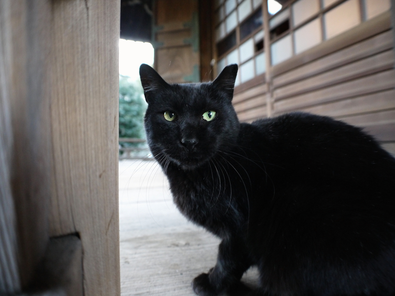 お堂の濡れ縁と黒猫