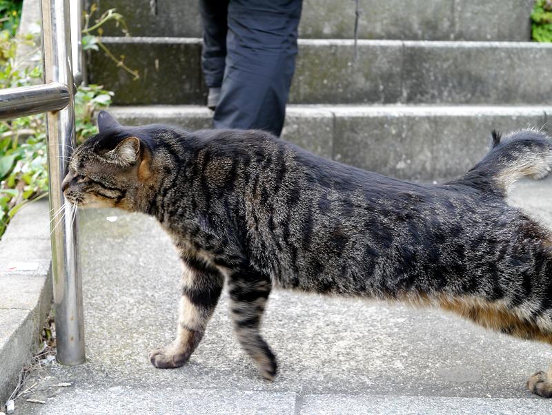 階段踊り場とキジトラ猫1