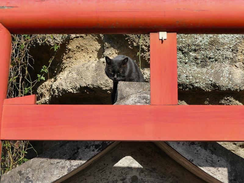 朱色鳥居と黒猫2