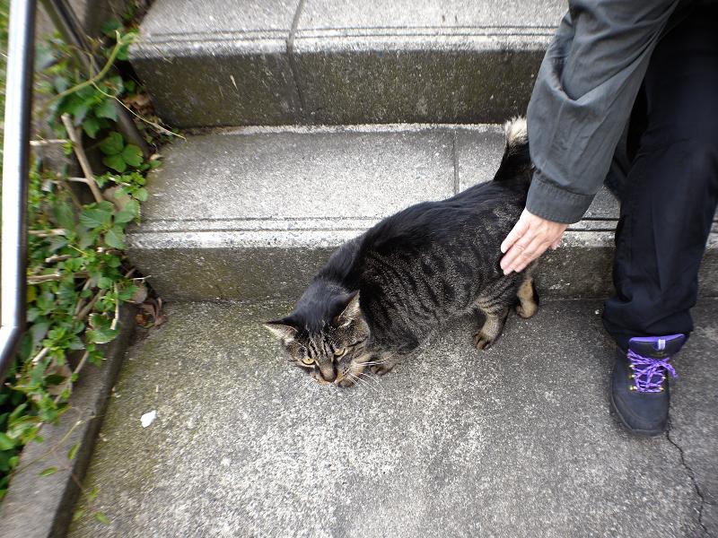 階段踊り場とキジトラ猫2
