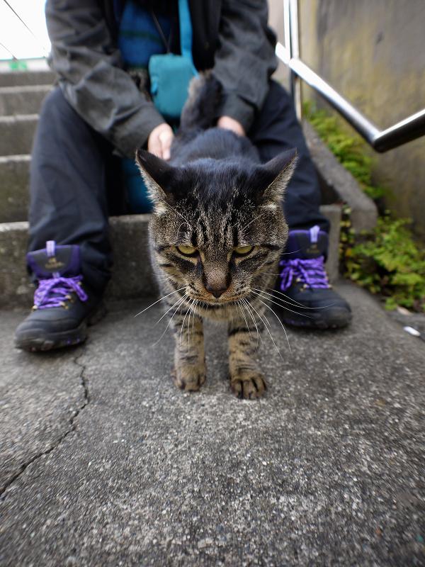 階段踊り場とキジトラ猫3