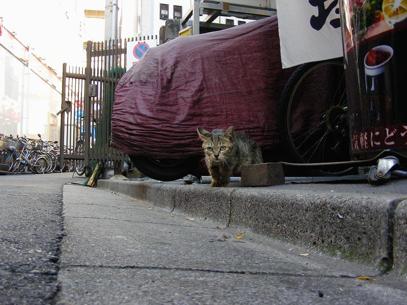 路地縁石とキジトラ猫1