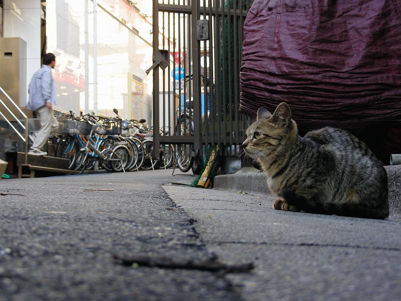 路地縁石とキジトラ猫3