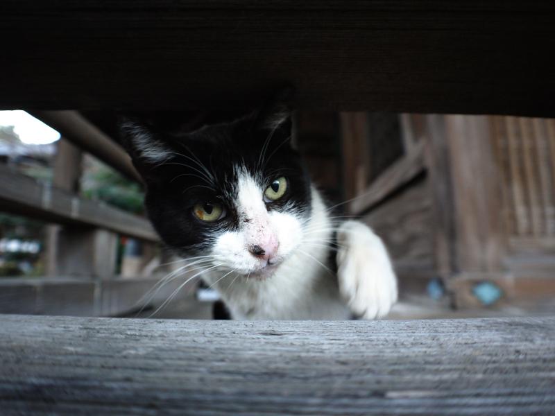 古堂欄看護師の黒白猫2