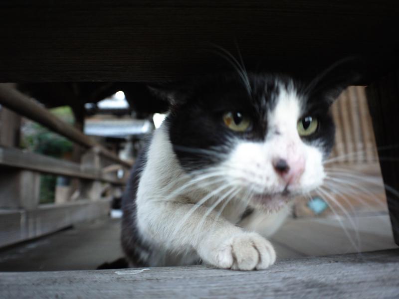 古堂欄看護師の黒白猫3