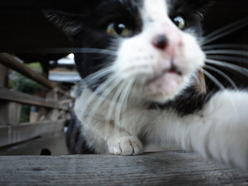 古堂欄看護師の黒白猫4